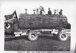 W.P. Robinson Co. with largest bur oak sawed in Ohio, 1934.